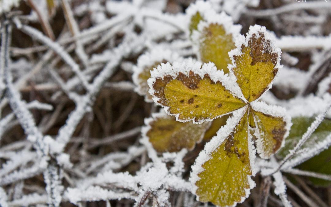 """Gelicidio, brinate, gelate e galaverna: i fenomeni di """"ghiaccio"""" dell'inverno"""