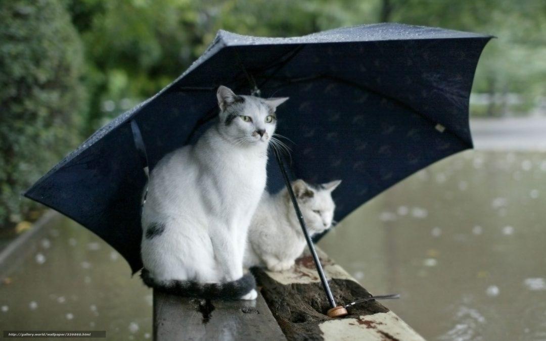 Previsioni Settimana 21-24 Ottobre: una buona dose di pioggia in arrivo!